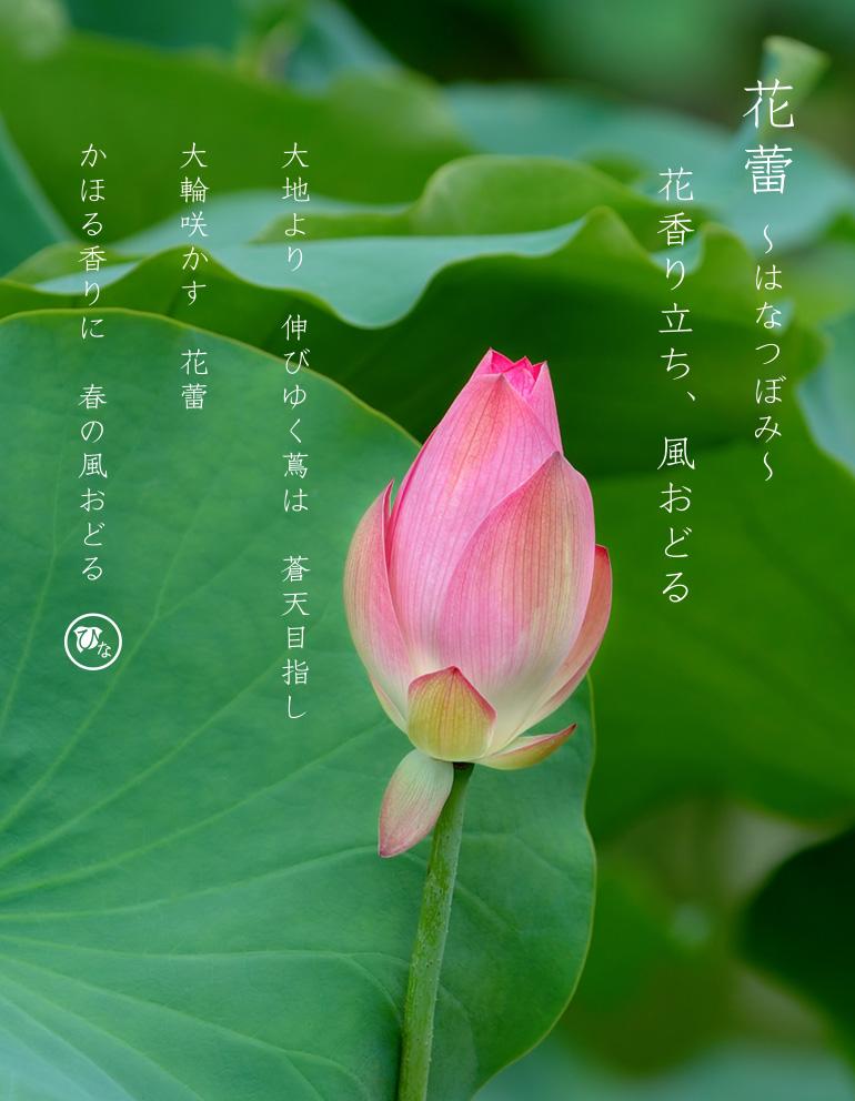 花蕾の名前と詩(うた)